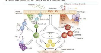 Παθογένεια – παθοφυσιολογία άσθματος